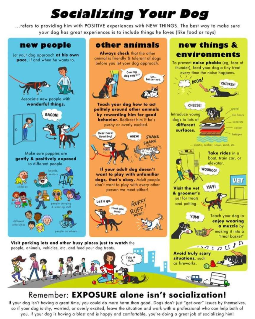 Blog-DogsSocializing